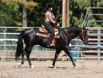 Horse Show Stock 008 by Notorious-Stock