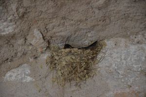 Nest of swallow in the entrance of the church by A1Z2E3R