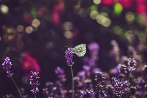 lovely bokeh with butterfly by CliffWFotografie