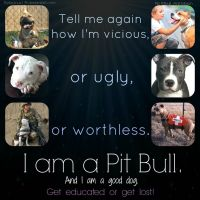 I am a Pitbull by Thylacinus1