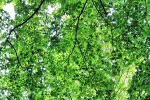 Green Leaves by KennyBlankenship