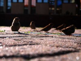 Pigeon Squad by Dkersys