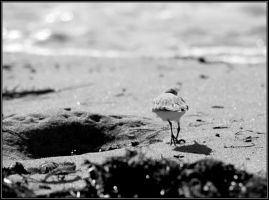 Beach with Running Bird 2 by Macomona