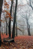 red.forest by miani89