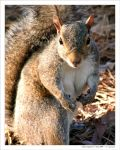 Mama Squirrel by curtg