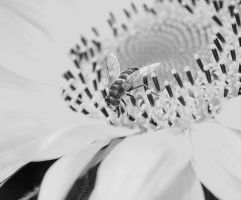 black'n white fly by Paranoj4