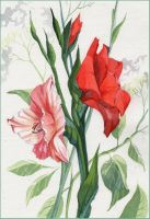 red and pink gladioli by kosharik69