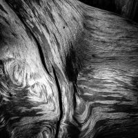Holz 2 by pillendrehr
