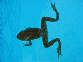 froggy 2 - top down by Exor-stock