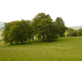 Beech trees and field 3 by SelvaStock