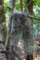 Spanish Moss 1 by like-a-seahorse