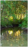 Trees of Summer by Val-Faustino