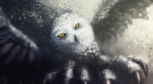 snowy owl by xpe