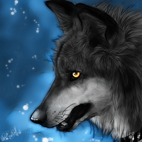 .:My December:. by WhiteSpiritWolf