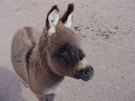 Baby Donkey by breemead