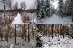 Winter Forest Stock Package by Burtn