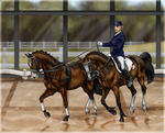 Hanoverian Duett by Tigra1988