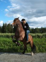 horse stock 5 by Ulvar-Stock