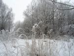 Winter forest 638 by MASYON