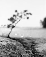 With our heads to the ground by JakezDaniel