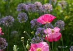 Summer colors by gigi50