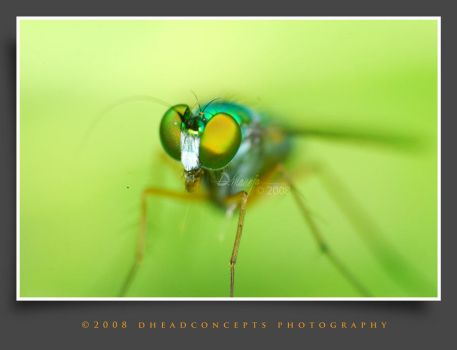 fly3 by dhead