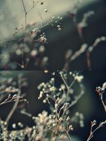 mist: by vitzy