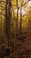 Autumn in the Montseny by GerardPort