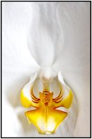 White Orchid by Roamerick