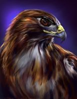 Bird of Prey PS by nosoart