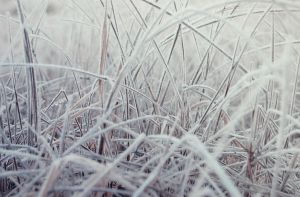 Cold grass by fotojenny