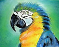 Parrot3 by Tomek3618