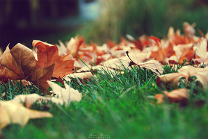 Autumn Leaves by Ana-D