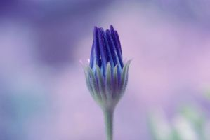 In Bloom by Vrohi