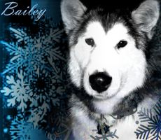Bailey Snow by ChickenChasser