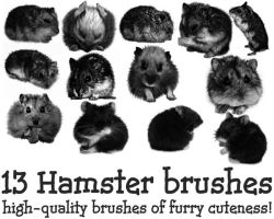 Hamster Brushes by KW-stock