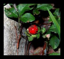 wild strawberry by dontbemad