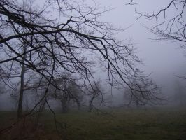 The foggy day 1 by mycophilic