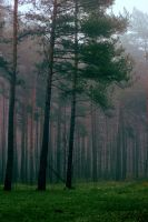 Mist in the Forest X by NorthernLand