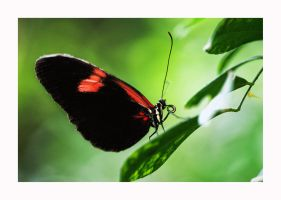 Butterfly 2 by calimer00