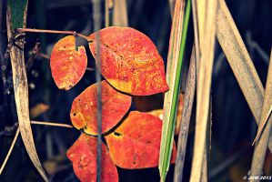 The Arrival of Autumn by JDM4CHRIST