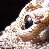 The glint in his eye close-up by corrinapalmer