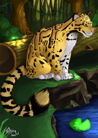Clouded Leopard by alpin-j