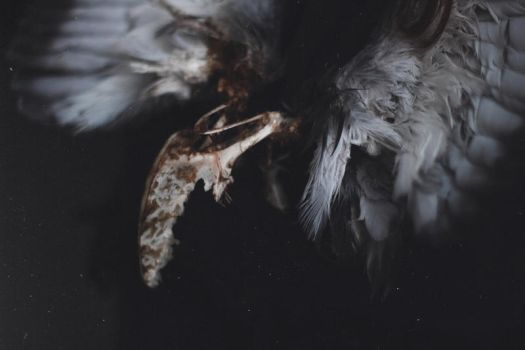 Death has tamed this bird by MariaPetrova