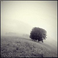 tree by onkin
