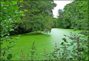 Lake Of Green by Estruda