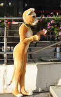 004 Sofia Lioness at EF16 by basil-lion
