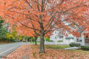Autumn in Lexington by Rikitza