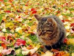 Autumn cat by rosaarvensis