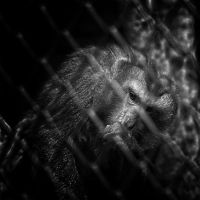 in cage by 7Redhotz